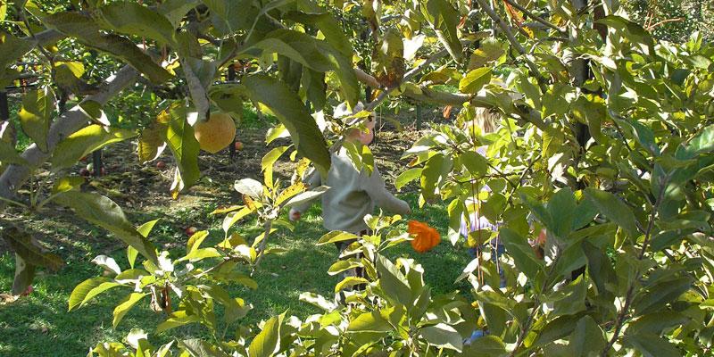 notfornothinbutapplesdontfallfarfromtrees